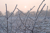Branches with a hoarfrost — Stock Photo