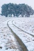 Winter landskapes — Stock Photo