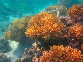 Underwater life of tropical sea — Stock Photo