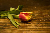 Tulip flower on wooden table — Stok fotoğraf