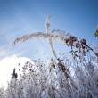 Hoarfrost — Stock Photo #14149219