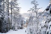 Austria Alps in winter — Stock Photo
