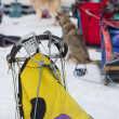 Sled Dog Racing - Stock Photo