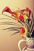 Zantedeschia aethiopica — Stock Photo
