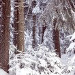 Winter forest — Stock Photo #26046847
