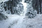 Primera nieve — Foto de Stock