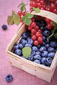 ягоды — Стоковое фото