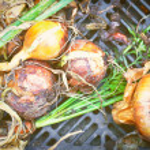Onions — Stock Photo #13553386