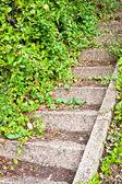 Stone steps — Stock fotografie