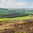 Stock Photo: Northumberland landscape