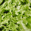 Lettuce leaves — Stock Photo #38809593