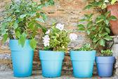 Plant pots — Stock Photo