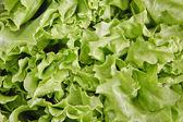 Lettuce leaves — Stock Photo