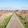 Stock Photo: Marshland path