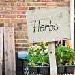 Herbs sale — Stock Photo