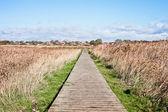 Marshland path — Stock Photo