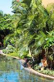 Tropical garden — Stockfoto