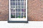 Window orchids — Stock fotografie