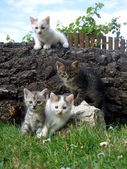 Four little kittens in the garden — Stock Photo