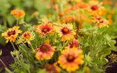 Fleurs orange abstraites de macro avec bokeh — Photo