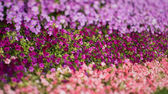 Colored flowers in park — Stock Photo