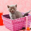 Kitten in the purple box — Stock Photo