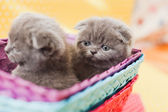 Kittens in the box — Stock Photo