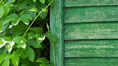 Green fence and plant — Stock Photo