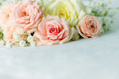 Beautiful roses — Stockfoto