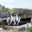 Group of penguins — Stock Photo #13998199