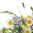 Wildflowers — Stock Photo