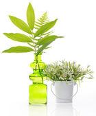 Arreglo floral — Foto de Stock