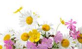 Fleurs des champs — Photo