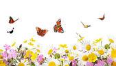 花和蝴蝶 — 图库照片