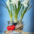 White crocuses - Stockfoto
