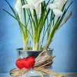 White crocuses — Stockfoto