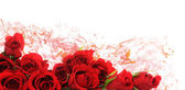 Red roses — Stock Photo