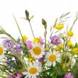 Wildflowers — Stock Photo #21283089