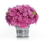 Bouquet of hydrangea — Stock Photo