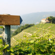 Direction sign in the vineyards — Stock Photo