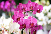 Beautiful orchids — 图库照片