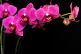 Purple orchid on black — Stock Photo