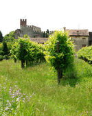Landscape with vineyards and castle — Stock Photo