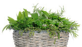 Basket with herbs — Stock Photo