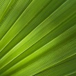 Palm leaf — Stock Photo #27301895