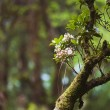 Flowers on old branch — Stock Photo