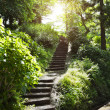 Stone stairs in park — Stock Photo