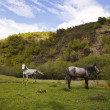 Horses in mountains — Stock Photo