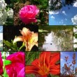 Natural flower collage - Stock Photo