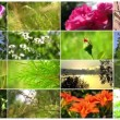 Natural flower collage — Stockvideo